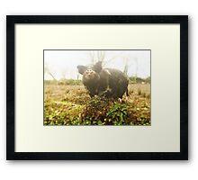 Piggy Framed Print