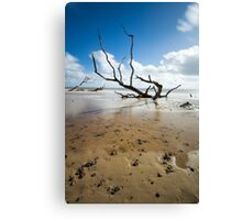 Tree Sinking in the Sand Canvas Print