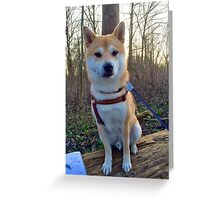Japanese dog in the nature Greeting Card