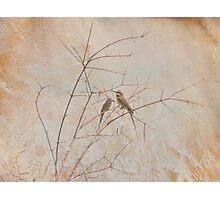 Bird Branch Photographic Print