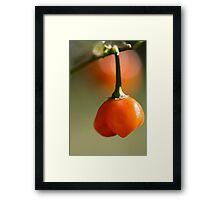 Day 13 - Orange Framed Print