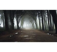 Path in a Magic forest with mist Photographic Print