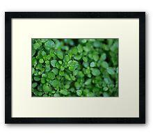 Day 15 - Green Framed Print
