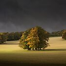 Autumn on th Downs by Ian Hufton