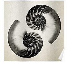 Nautilus Shell Lithograph  Poster