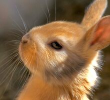 Bunny by Photography by TJ Baccari