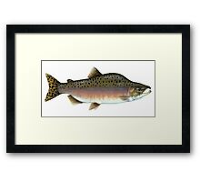 Salmon Artwork  Framed Print