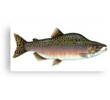Salmon Artwork  Canvas Print