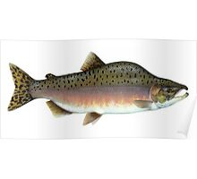 Salmon Artwork  Poster