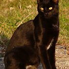 Blackie Posing Pretty by MaeBelle