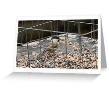 Willow Tit Greeting Card