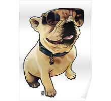 Alfie the French Bull Dog Poster