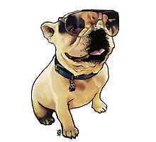 Alfie the French Bull Dog Photographic Print