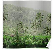 Rice Terrace Storm Poster