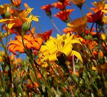 Orange & Yellow Folds by Vanessa  Warren