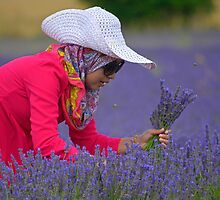 The Lavender Picker by Anthony Hedger Photography