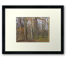 Fall Birch Framed Print