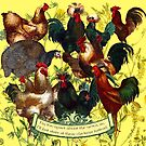 Gazing at Victorian Chickens 1 by Donna Catanzaro