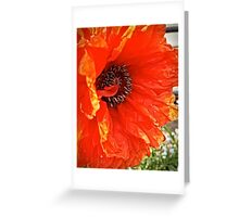 Flame Poppy Side View Greeting Card