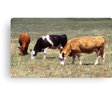 Cattle Farm Canvas Print
