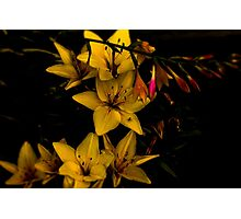 Midnight Flowers Photographic Print