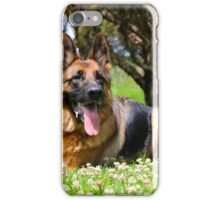 German Shepherd Resting  iPhone Case/Skin