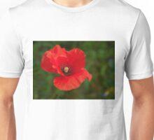 Papaver rhoeas flower Unisex T-Shirt