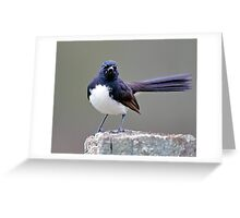 Willie Wagtail Greeting Card