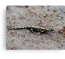 Carpathian Salamander Canvas Print