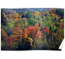 Fall in Franklin Poster