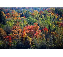 Fall in Franklin Photographic Print
