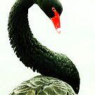 hello im mr black swan! by xxnatbxx