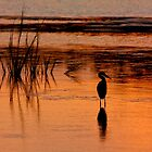 sunset beauty heron by Manon Boily
