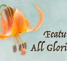 All Glorious Lilies Featured Banner by Marilyn Cornwell