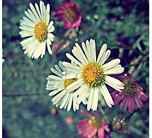 Daisy Chains Photographic Print