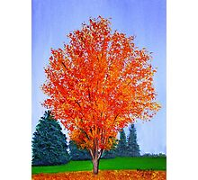 Fall Tree in ND Photographic Print