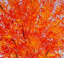 Fall Tree in ND Sticker