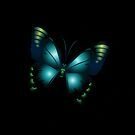 Blue Butterfly by Scott Mitchell