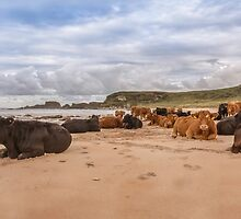 We Moo like to be beside the seaside by peaky40