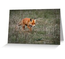 On the hunt Greeting Card