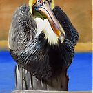 What Pelicans Do (1) by Phyllis Beiser