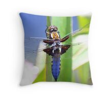 Broad Bodied Chaser Dragonfly Throw Pillow