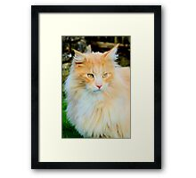 Soft as a pussy cat Framed Print