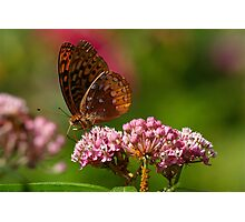 I Love This Butterfly Photographic Print