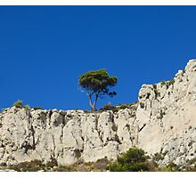 A lonely tree on the rocks Photographic Print