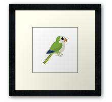 Adorable Monk Parakeet Framed Print