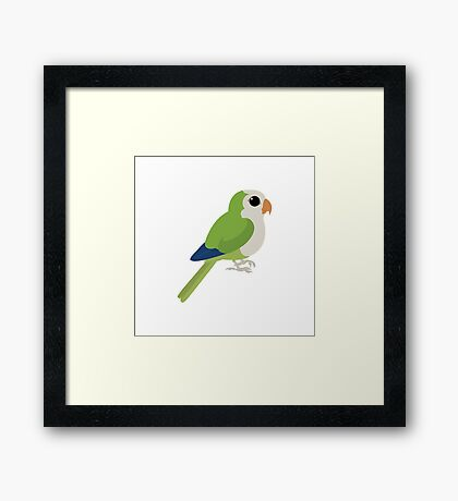 Adorable Monk Parakeet Framed Print