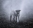 Dogs with game face on .32 by Alex Preiss