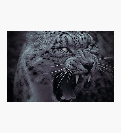 Predatory Gaze Photographic Print