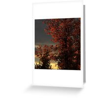 Autumn's First Light Greeting Card